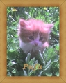 Rosy (Princess Yvonne's  and Claudia_bb's kitty:) - babies-pets-and-animals fan art