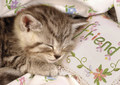 Sweet Dreams Princess :) - babies-pets-and-animals photo