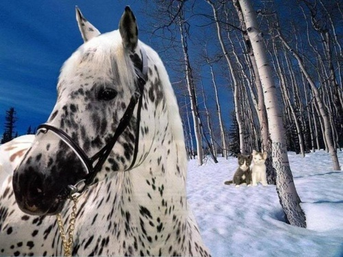 appaloosa Beauty