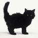 Black kitty - black-cats icon