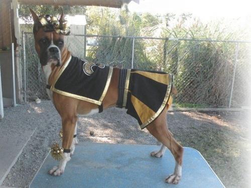 boxer, boxeador Dog as Saint Sensation Cheerleader