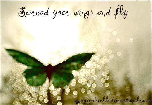 con bướm, bướm