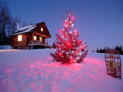 Christmas wallpaper with a chalet, a bungalow, and a red maple entitled Christmas <33