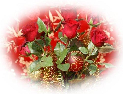 圣诞节 玫瑰