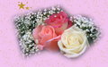 Christmas Roses - roses wallpaper