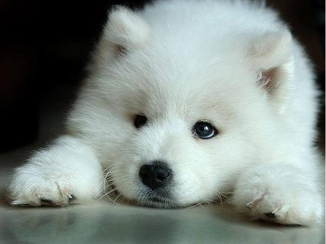 Cute Wolf Zone images Cute Wolf wallpaper and background photos
