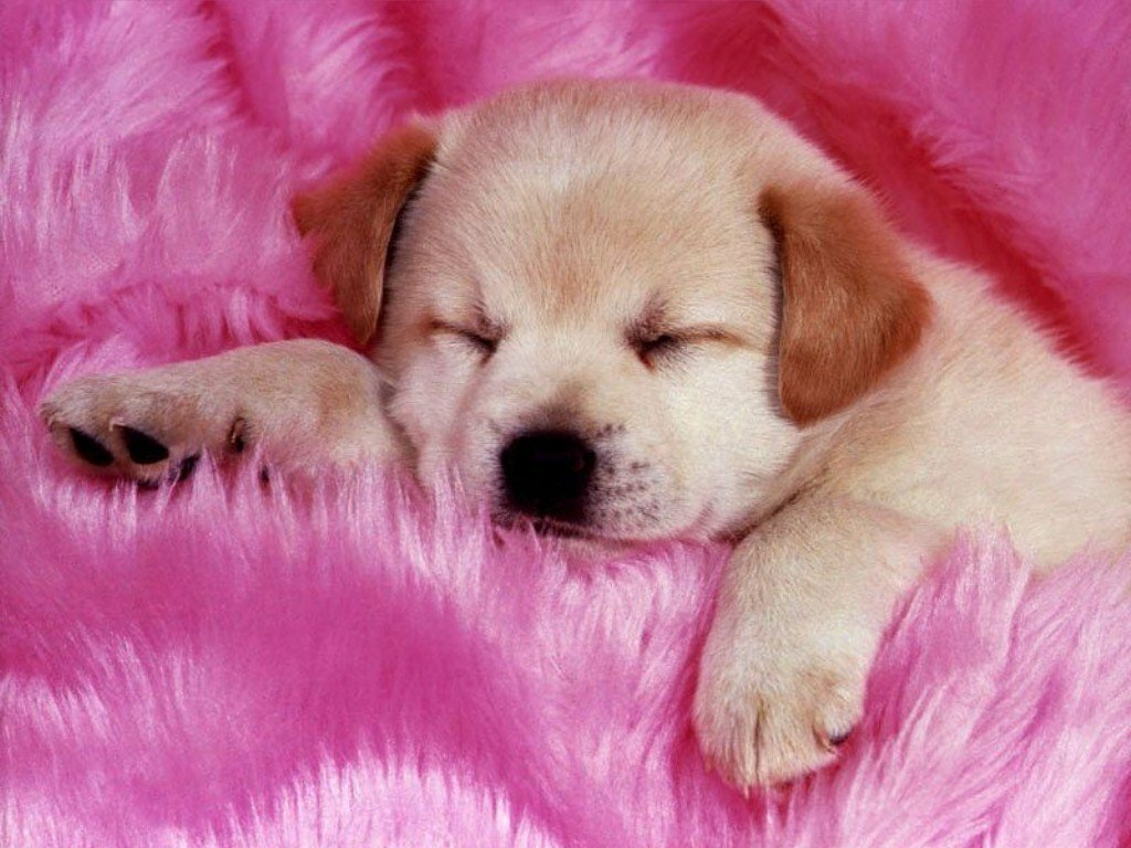 Cute puppy - Babies Pets and Animals Photo (16883275) - Fanpop