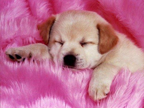 Cute 子犬