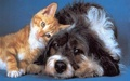 Dog and Cat Wallpaper - teddybear64 wallpaper
