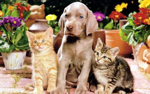 Dog and Cats Wallpaper