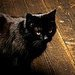 Here Kitty.... - black-cats icon
