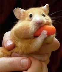 I got a carrot