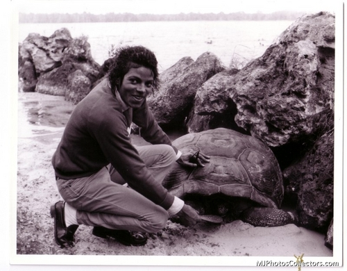 MJ and tortue