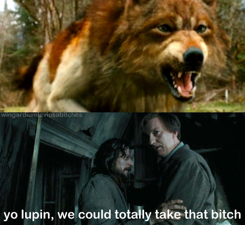 Remus and Sirius have a plan