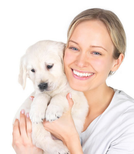 anak anjing, anjing sweet