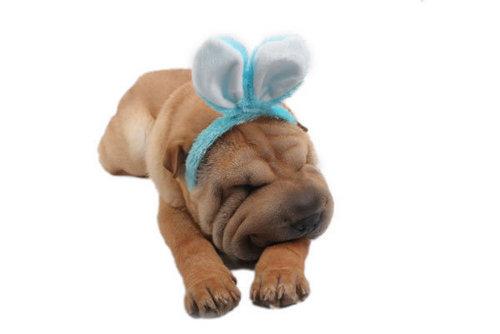 کتے sweet