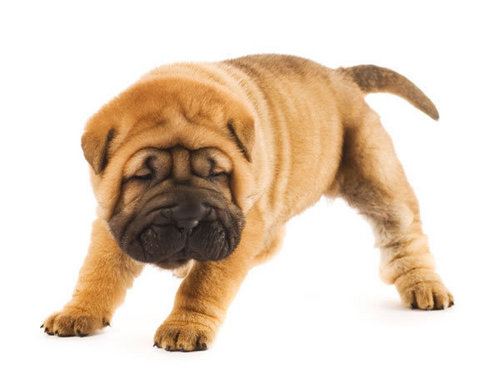子犬 sweet