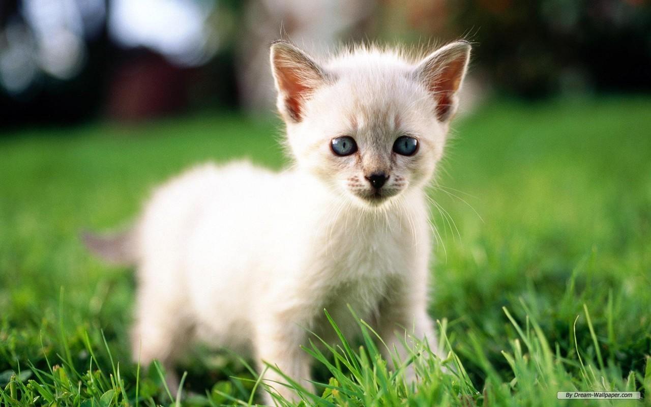 A Lovely Kitten for Lovely Shirin <3
