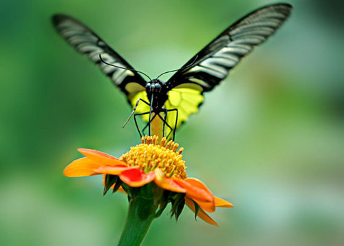 Beauty butterfly