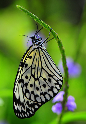 Butterflies wallpaper entitled Beuatuful butterfly