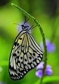 Beuatuful butterfly