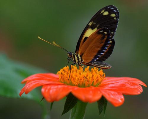 Beuatuful 나비