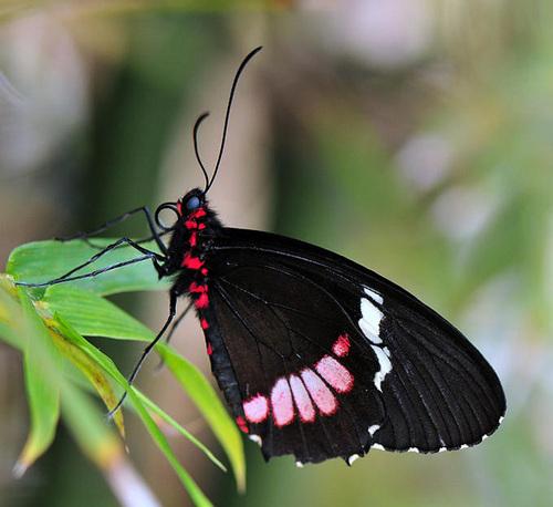 Beuatuful mariposa