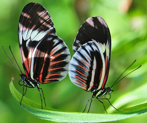Beuatuful butterfly