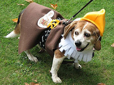 Dog dressed up as a Dwarf