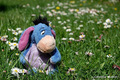 Eeyore - shiriny photo
