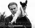 Leonardo DiCaprio - leonardo-dicaprio wallpaper