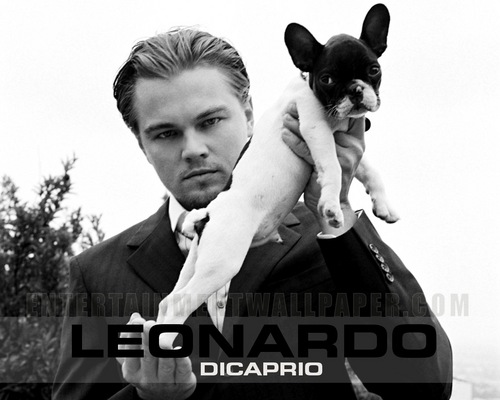 Leonardo DiCaprio wallpaper containing a chihuahua titled Leonardo DiCaprio