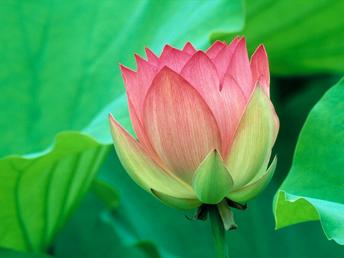 Pink with green