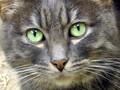 Wonderful Kitty with green eyes :)