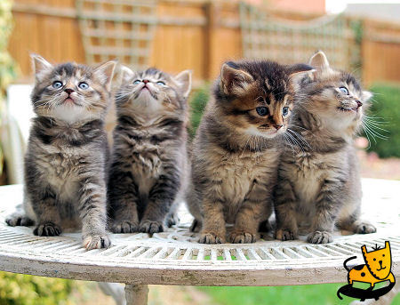 cuttest chatons ever