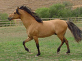 "the ""real"" Spirit - spirit-stallion-of-the-cimarron photo"