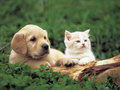 ♥ puppies and kitties ♥
