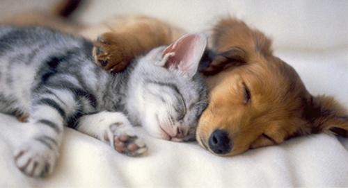 ♥ Anak Anjing and kitties ♥