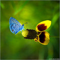 Awesome butterflies