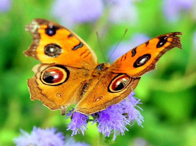 Awesome kupu-kupu