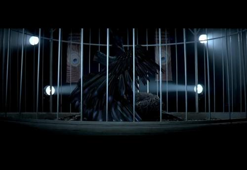 Can't Be Tamed music video