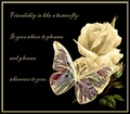 For you my love - yorkshire_rose photo