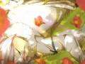 Fubuki Shirou 2