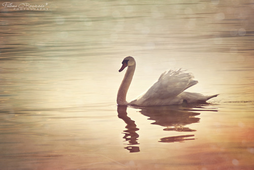 My soul is an Enchanted boat, Which, like a sleeping swan, doth float Upon the silver waves