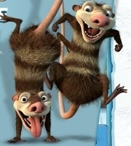 Ice Age Possums