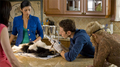 Royal Pains - Season 1 episode 6 - royal-pains photo