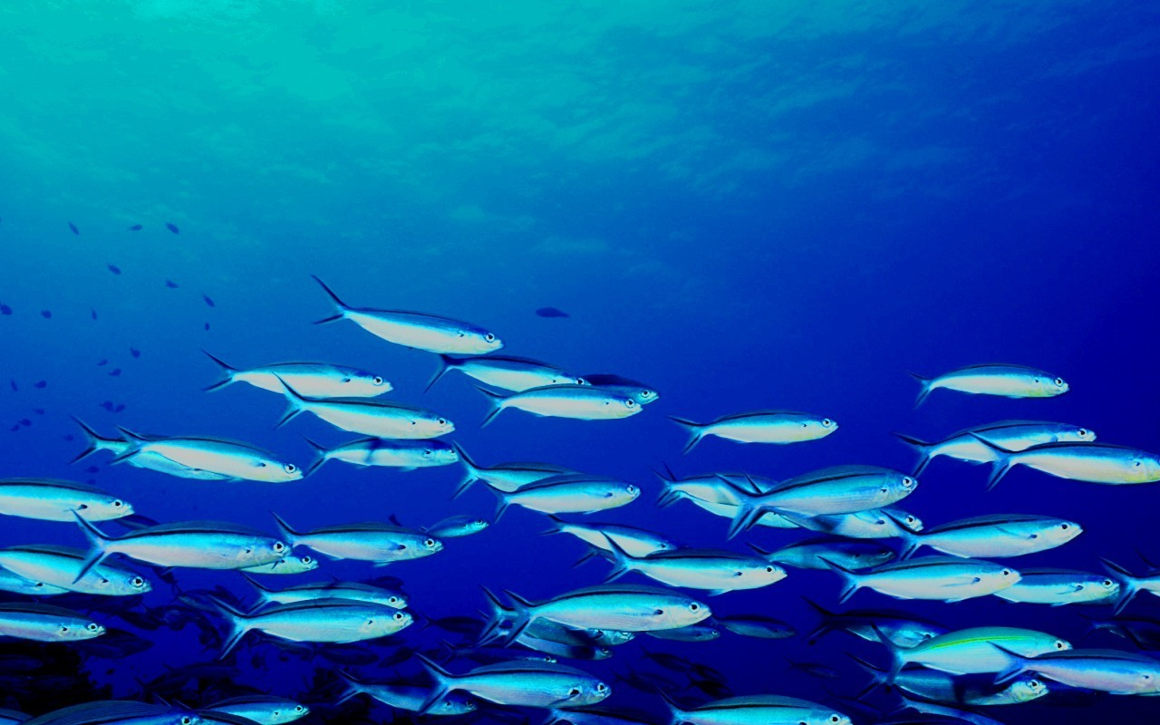 picture of a school of fish