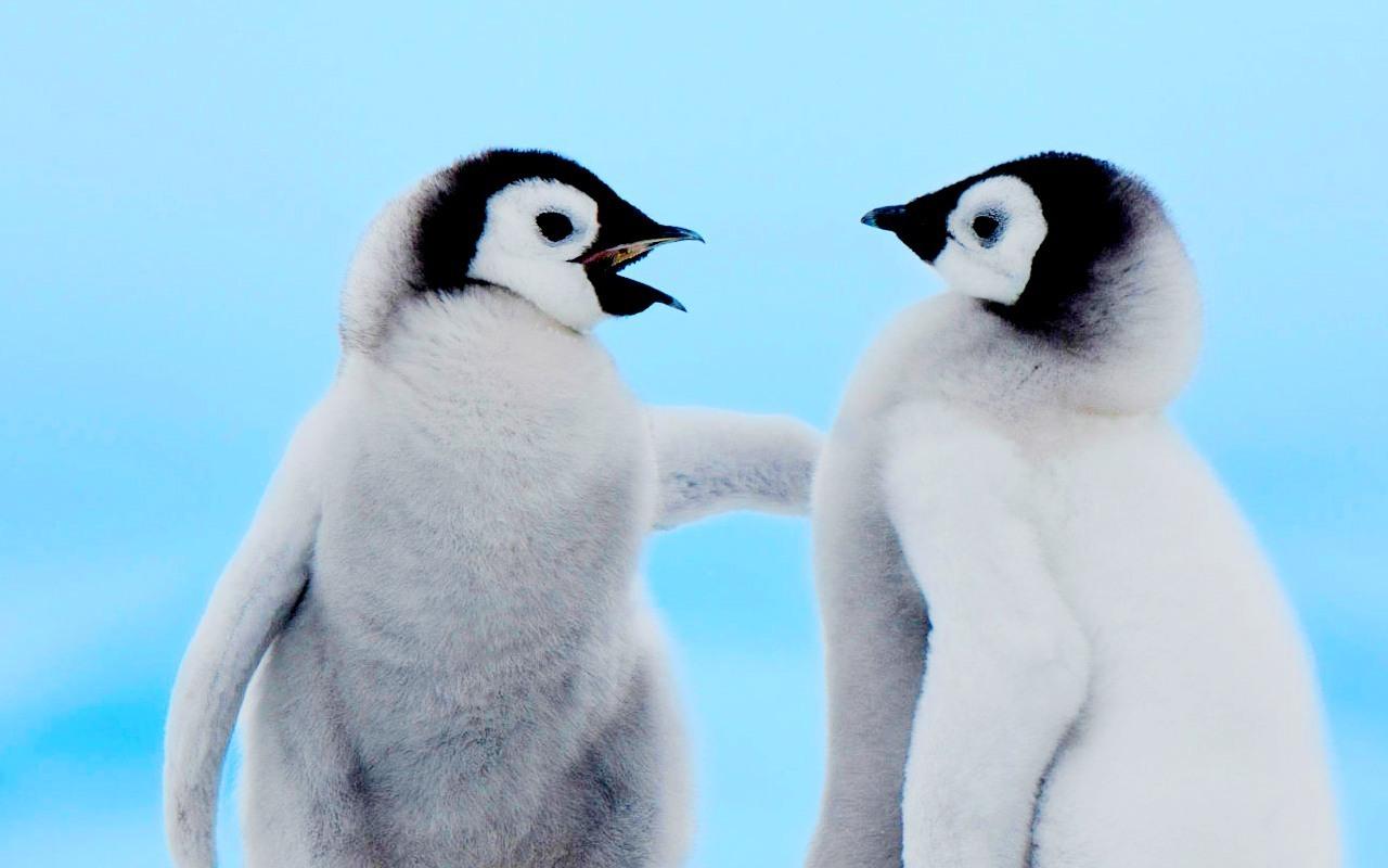 Stock ~ Penguins - Sto...