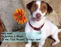 Well done!, on getting a medal in the Jack Russell Terriers spot!