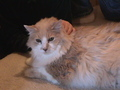 and Charlie my other cat, i miss him too:(